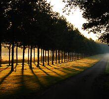 A summer-morning dream by jchanders