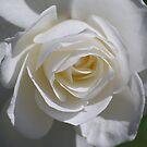 Secret of White Beauty by saseoche