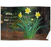 April Daffodils Poster