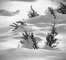 Sage Brush Winter by Ryan Houston