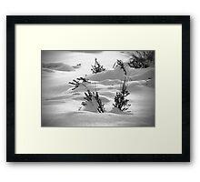 Sage Brush Winter Framed Print