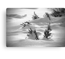 Sage Brush Winter Canvas Print
