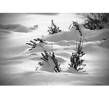 Sage Brush Winter Photographic Print