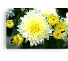 Dahlia Bloom & Buds in Yellow & White Canvas Print