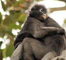 Monkey cuddles. by elphonline