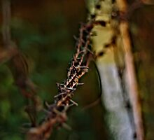 barbed wire by sands21