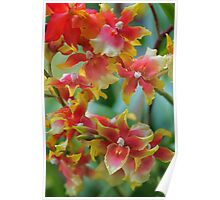 Festive orchids Poster