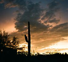 Saguaro Silhouette by jpuent09