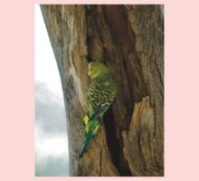 Female budgerigar at Alice Kids Clothes