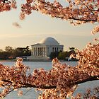 Cherry Blossoms by BProven40