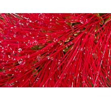 Red brush Photographic Print