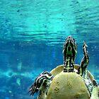 *Turtle Turtle* by HelmD