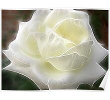 White Rose 3 Angelic Poster