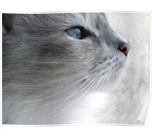 Kitty Thought Poster
