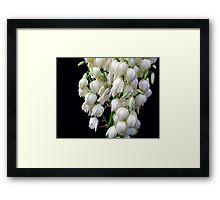 Yucca  treculeana Carr. flower Framed Print