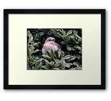 'Hangin' at Home...' Framed Print