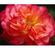 Painted Rose Photographic Print