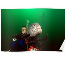 Diver with Wolf Eel Poster