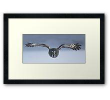Great Grey owl in flight Framed Print