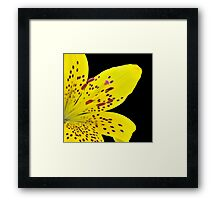 Yellow Lily On Black Framed Print