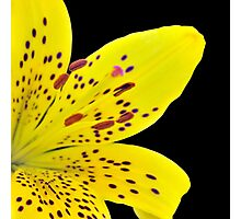 Yellow Lily On Black Photographic Print