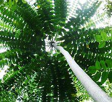 umbrella palm by jeroenvanveen