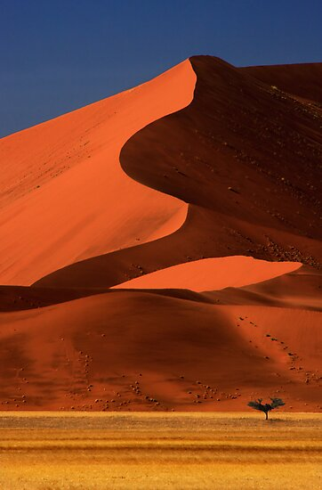 Big Dune Lone Tree, Sossusvlei, Namibia. Africa. by photosecosse /barbara jones