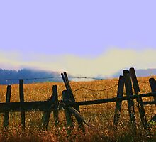Golden Fields, Fence and a Mystical Mist by Polly Peacock