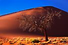 Dune 45, solitary tree. Sossusvlei, Namibia. Africa. by PhotosEcosse