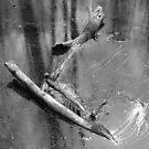 Sunken Branch by David Schroeder