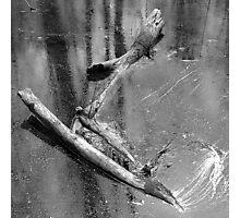Sunken Branch Photographic Print