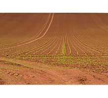 Agricultural Abstract Photographic Print