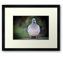 Off to weight watchers Framed Print