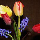 Bouquet of Tulips ~1 by Finbarr Reilly