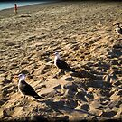 3 Birds by littleny