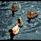 Ducks through the snow by littleny