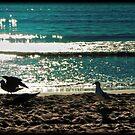 Gulls along the shoreline by littleny