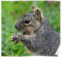 Gossip Squirrel Poster