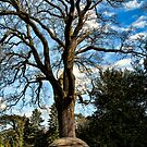 Tree Shelter~ by WJPhotography