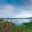 RSPB Leighton Moss  by Stephen Knowles