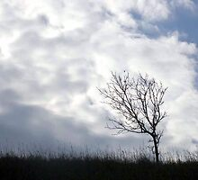 Tree, In Line With Moving White Cloud by Helena Haidner