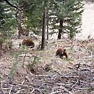 Mama & Baby Cubs by NancyC