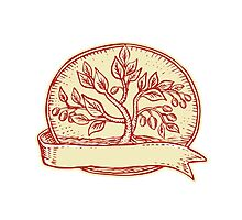 Olive Tree Ribbon Oval Etching Photographic Print
