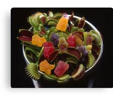 Jelly Baby Junglism #2 Canvas Print