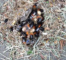Nest of red-tailed bumblebee. by anibubble