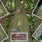 Chorisia Floss Silk Tree by Virginia N. Fred
