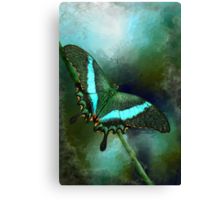 Emerald Peacock Swallowtail Canvas Print