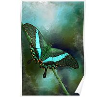 Emerald Peacock Swallowtail Poster