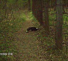 skunk by CraigEmlyn37
