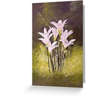 Lilies and Light Greeting Card